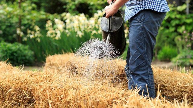 Gärtnern geht auch ohne Gartenerde