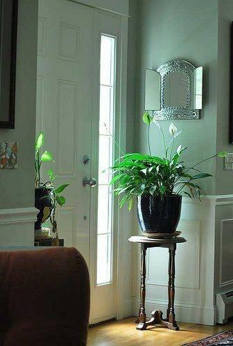 Lovely green arrangement