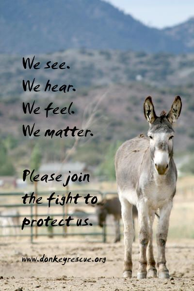 Peaceful Valley Donkey Rescue -- PVDR was started and is run by one of the most dedicated, amazing couples I've ever had the honor of meeting.
