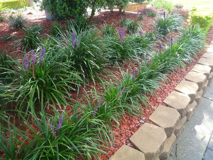 20 best Liriope in Landscaping images on Pinterest | Diy landscaping ...