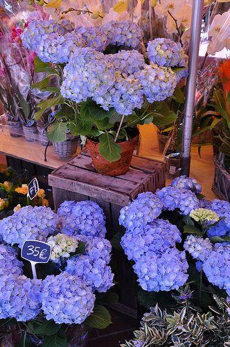 Nice Flower Tattoo Ideas For Women: 17 Best Images About ~Quaint Flower Shops~ On Pinterest