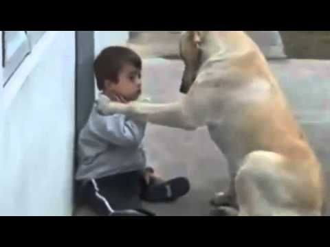 Down Syndrome child with dog - YouTube