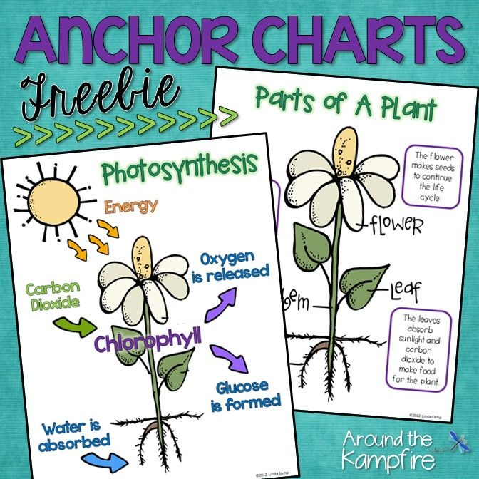 Free photosynthesis and parts of a plant anchor charts for ...
