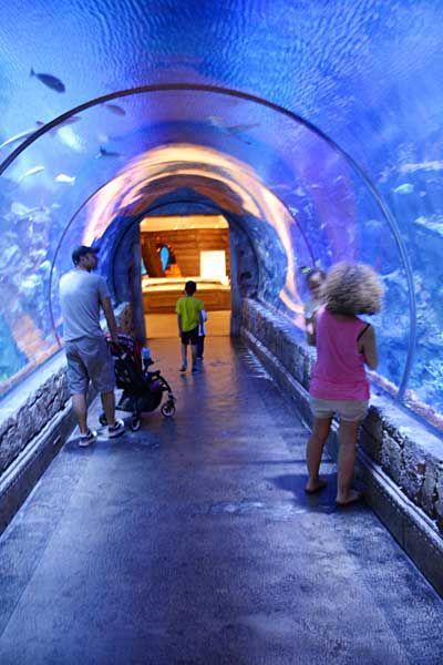 ラスベガスの水族館「シャーク・リーフ」ラスベガス 旅行・観光の見所。