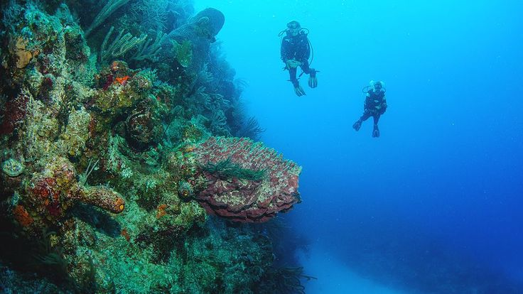 Dive Deals Reserve your week-long 2017 summer vacation with Dive Provo and Ports of Call Resort before October 31 2017 and you'll save $245 per person! If you like our pins please follow us: #divingtales
