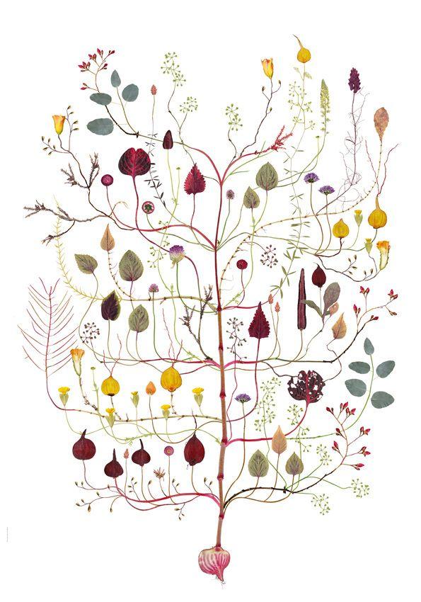 Amarant-träd / Amarant Tree NEW! - Lottas Träd/ Lottas Trees