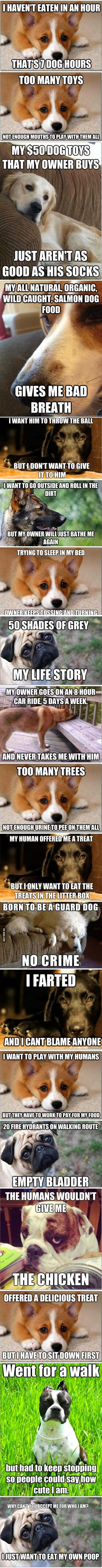 best Must love dogs images on Pinterest Doggies Funny animals