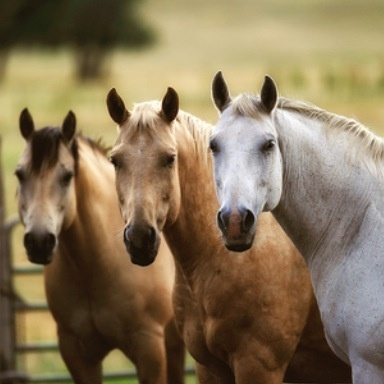 """<3....Horses/Ponies - """"Hello there, hanging out with my buddies""""..."""