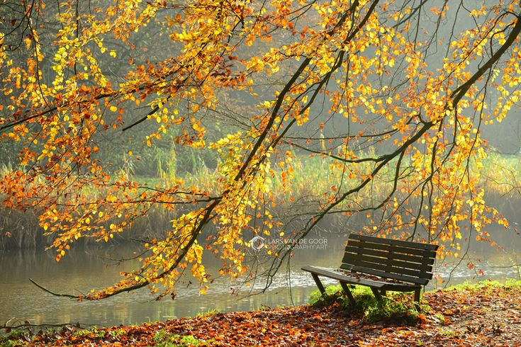 take a seat and shelter under my leaves