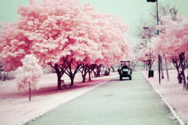 This picture shows just softness. Pink tree.