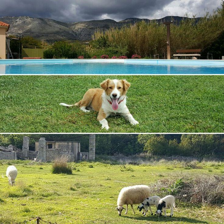 Life in farm.