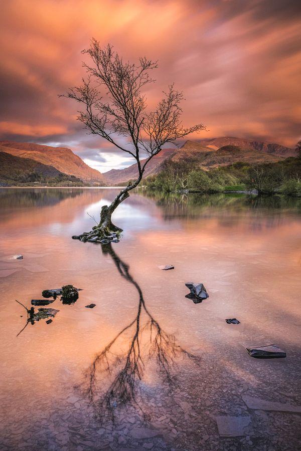 ~~Lone Tree on Llyn Padarn | Snowdonia, Wales | by Verity ...