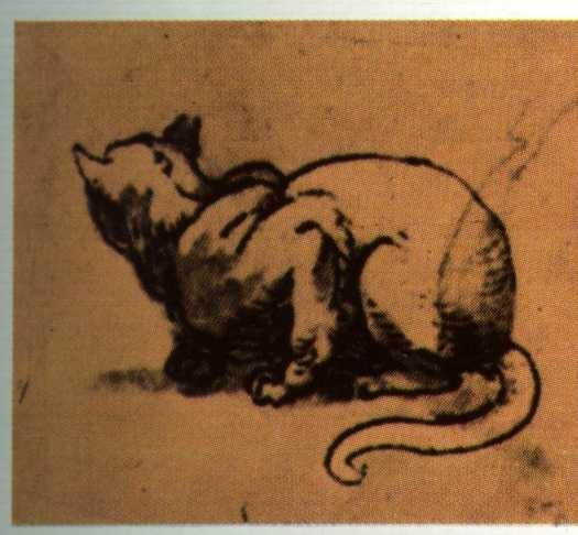 Interpretazione del gatto Michelangelo