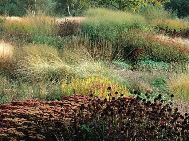127 best images about piet oudolf on pinterest for Piet oudolf favorite plants