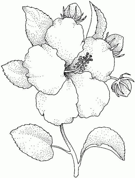 dibujos para pintar de flores hermosas  Buscar con Google
