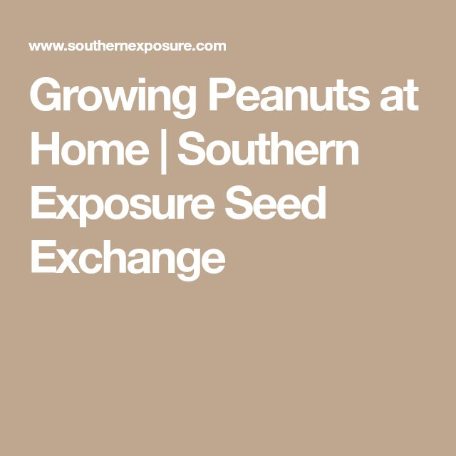 Growing Peanuts at Home | Southern Exposure Seed Exchange