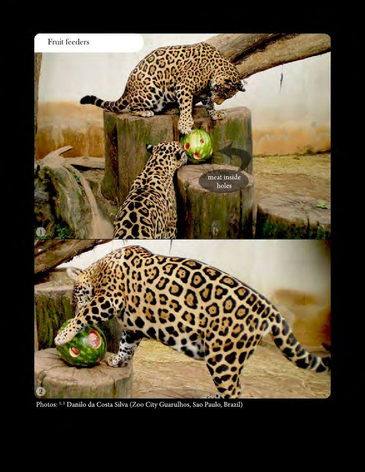 Feeding enrichment - fruit feeders. Animal Welfare in Captivity and Environmental Enrichment book. Download free in English and/or Spanish on: https://www.scribd.com/collections/5757077/Animal-enrichement-and-welfare https://www.academia.edu/8754986/Environmental_Enrichment_and_Well-Being_of_Captive_LATAM_Mammals https://www.academia.edu/8755049/Enriquecimiento_Ambiental_y_Bienestar_de_Mam%C3%ADferos_en_Cautiverio