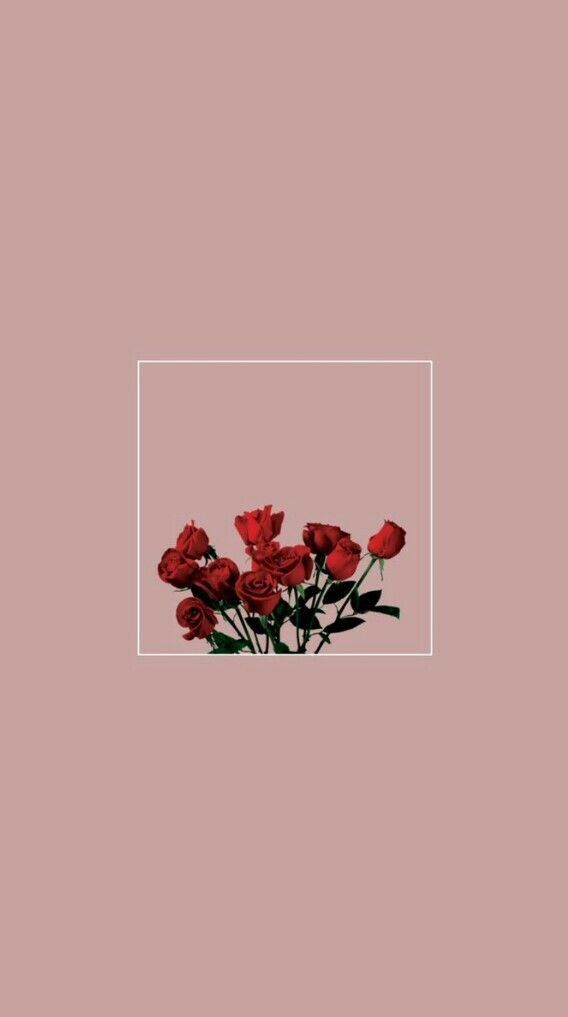 Pink Background Red Roses In 2019 Aesthetic Iphone