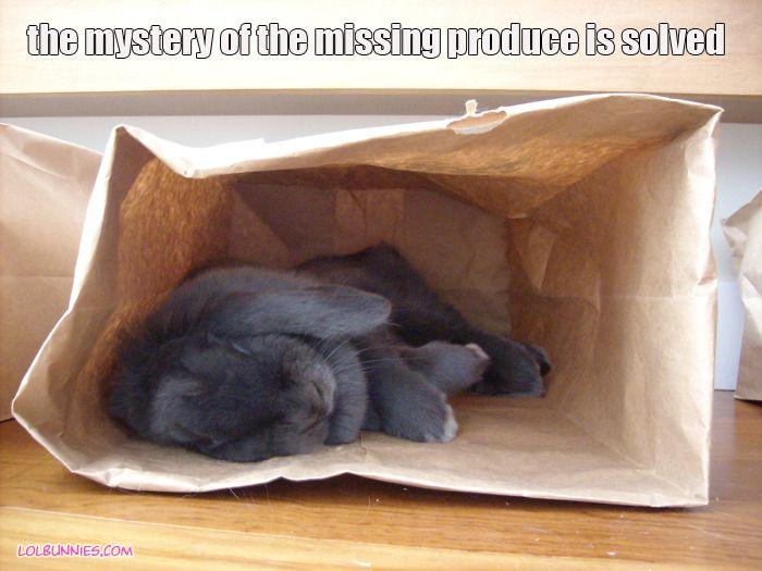 House Rabbit Society pic.....looooooove my bunnies