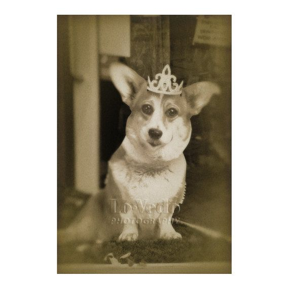 Because I think your corgi would come with a tiara (why not?!?) Royal Corgi Photograph British Royal Family Crown by LoVedoArt