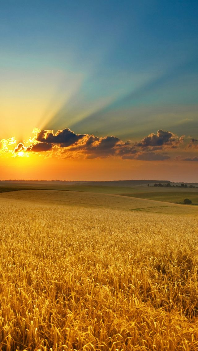 Golden summer field iphone 5s wallpaper this is an attractive wallpaper website for iphone - Beautiful country iphone backgrounds ...