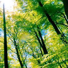 Effet des scènes de la nature sur le système nerveux parasympathique