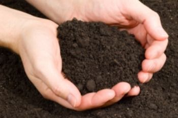 Topsoil for Sale at Wholesale Prices