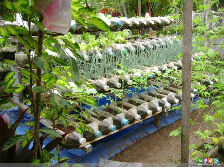 Пластиковые бутылки сад - Добро пожаловать на ум ранчо!  - Жизнь, как жизненного драма игра триумфа в жизни и наслаждаться жизнью