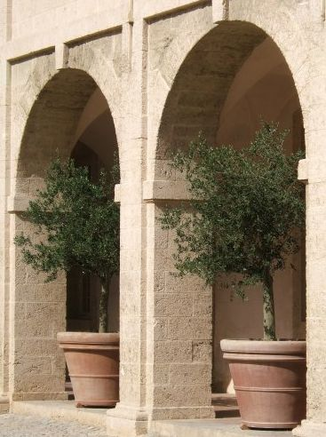 17 best ideas about arbequina olive tree on pinterest for Fertilizing olive trees in pots