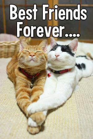 Best Friends Forever kitty