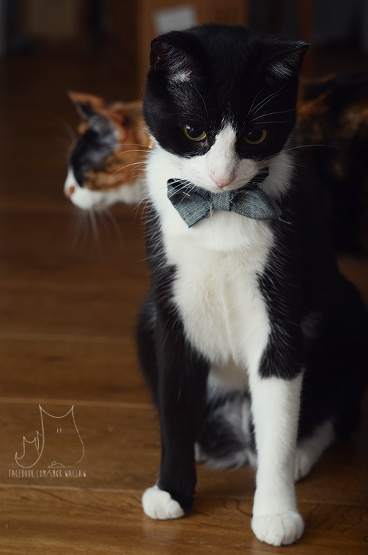 Smo & Świn #cat