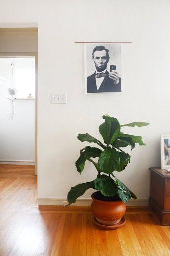 bedding plant expert hessayon