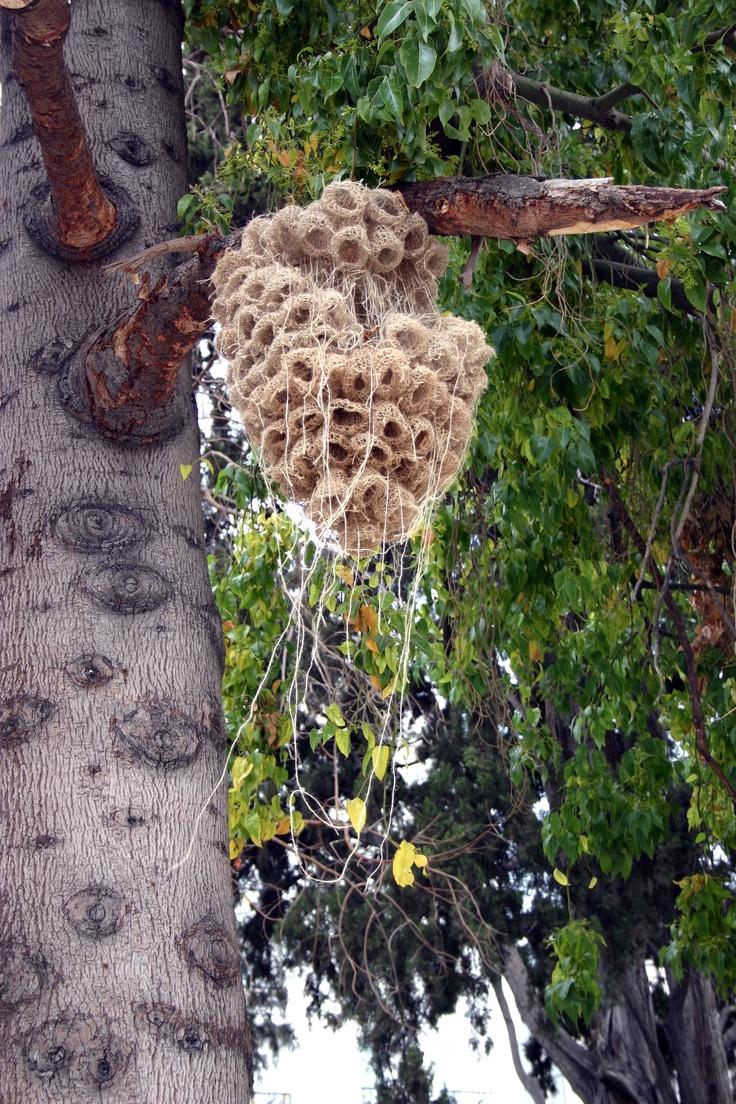 Kaziale Stavroula  Threads of Jute.