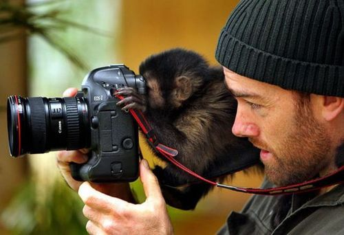 monkey with a  Canon Camera.