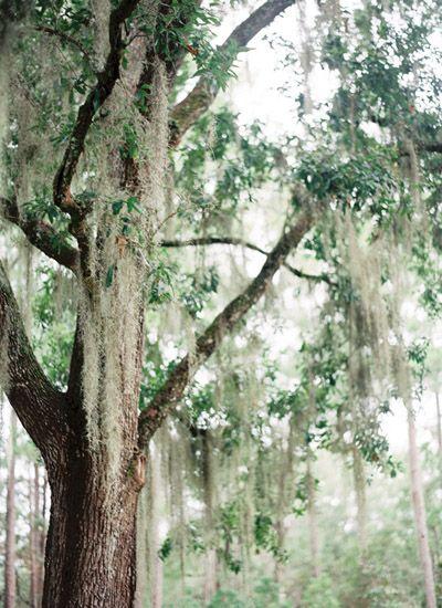 Spanish moss   Lauren Kinsey #wedding