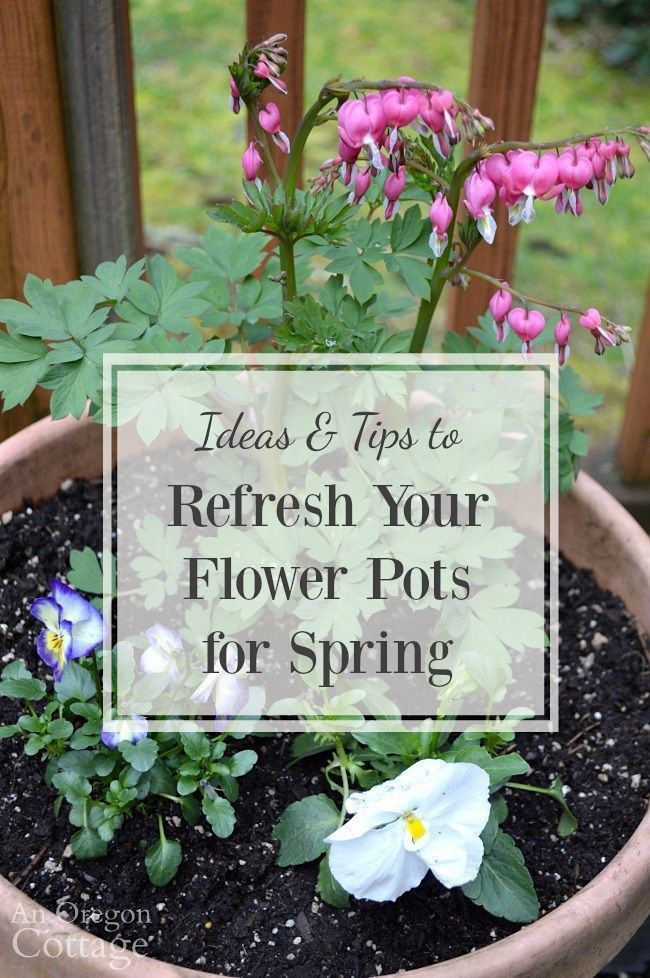 Ideas and tips to refresh your flower pots for spring using readily available spring flowers like primroses, violas, pansies and ranunculus.
