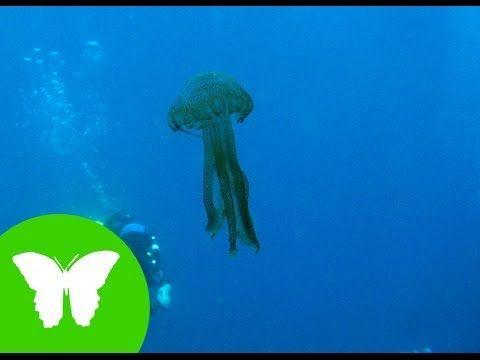 Vídeo de La Eduteca sobre esponjas, medusas y gusanos