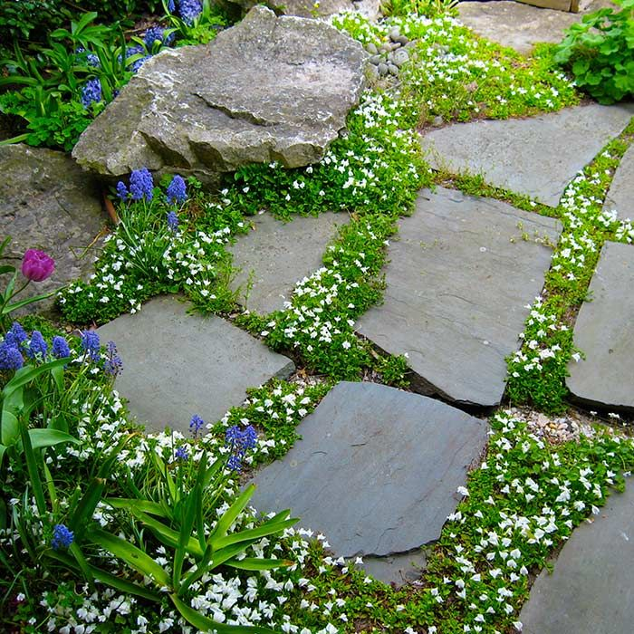 Landscape Stone Ground Cover : Best images about ground cover on pinterest green