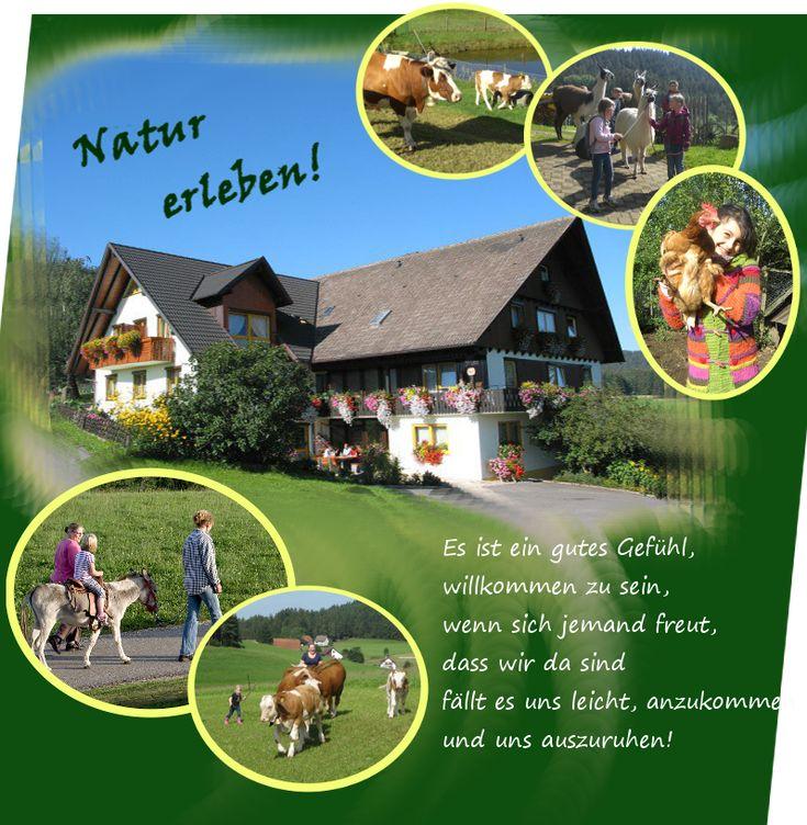 Urlaub auf dem Bruckhof Schwarzwald - Bruckhof, Iris