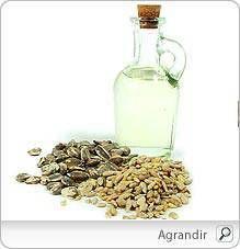 Graines de tournesol - Bienfaits, Valeur nutritive, Conservation...