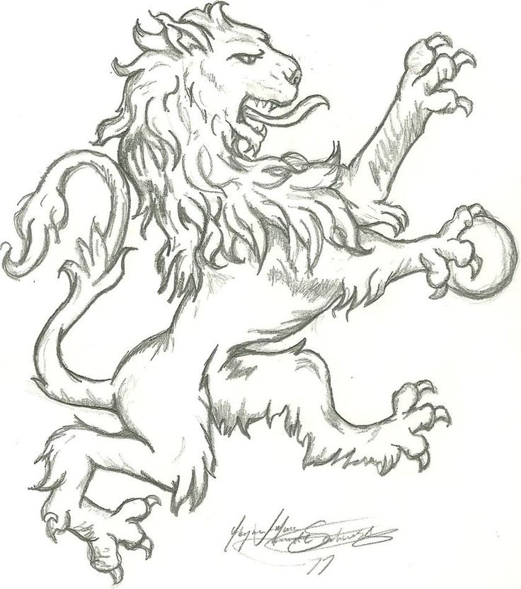 English Lion- first draft by ~DingoDreamtime
