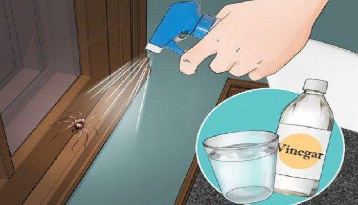 Ads ¿Quiere deshacerse de las arañas lo más rápido posible? Entonces usted no debe preocuparse, acaba de leer la siguiente lista de recursos naturales para mantener las arañas lejos de su casa. Limón Usted debe poner unas gotas de limón en cada rincón de su casa, porque hay que saber que las arañas detestan el sabor y el olor. Vinagre blanco Mezclando parte de vinagre con dos partes de agua en un aerosol obtendrá una buena mezcla que será de gran ayuda para las áreas infectadas en su casa…