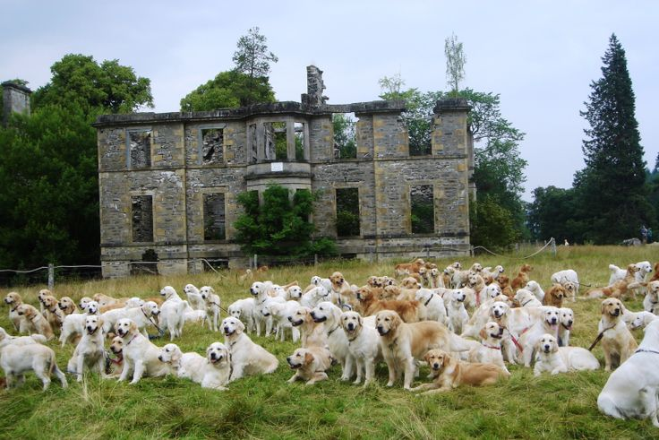 Guisachan House was the birthplace of the Golden Retriever, and is at Tomich near Inverness (Scotland). It was the home of Lord Tweedmouth, who rebuilt the whole village.  A 'gathering' of people from all over the world took place in July/August 2006. The photo shows some of the descendants of Nous x Belle (Tweed Water Spaniel) 1868.