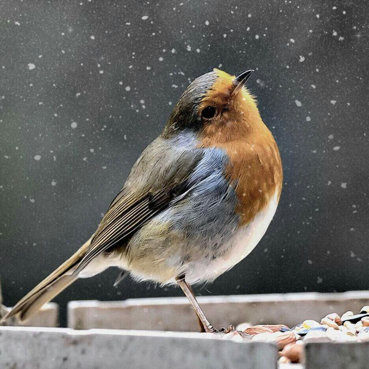 What a Beautiful bird!  Wow!  God give us such beautiful creatures to look at!  (: