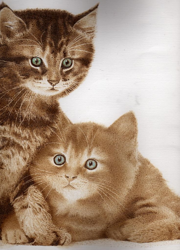 Kittens. Pyrography on Paper. Clive Smith.