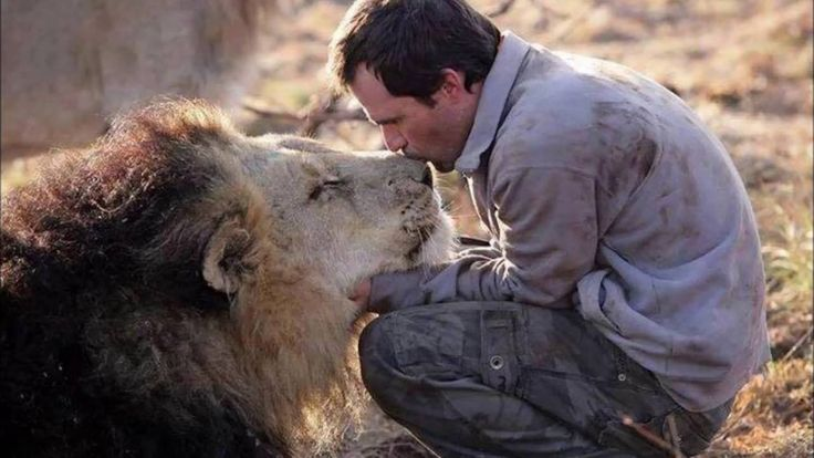 Amazing Photo Of friendship Between Animals And Human