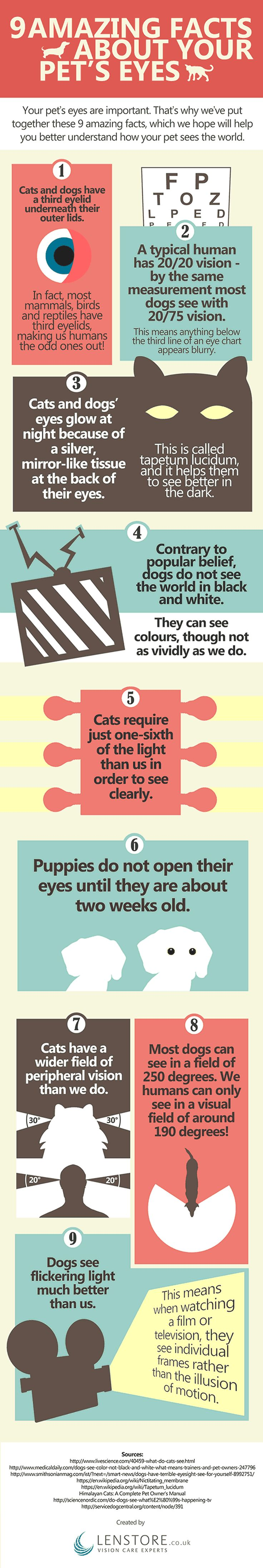 Infographic – 9 Amazing Facts About Your Pet's Eyes