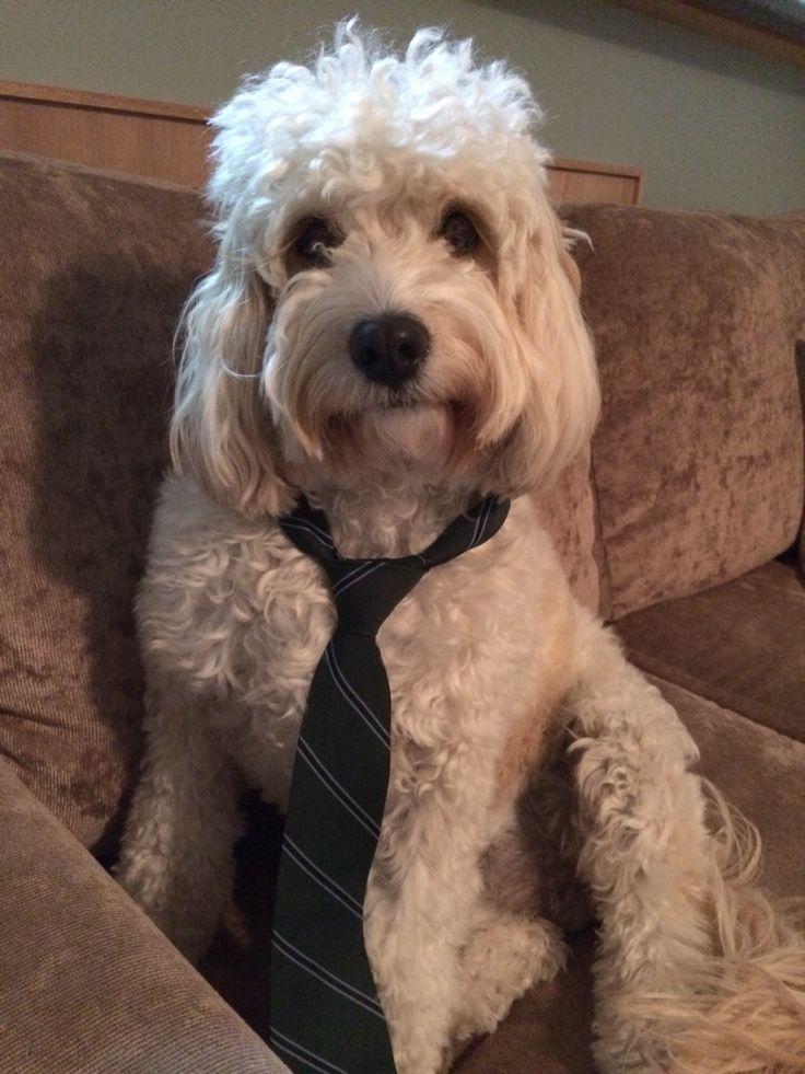 Wearing Dads school tie