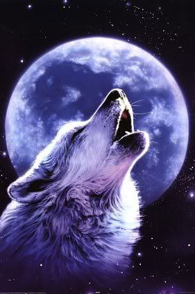 Wolves Howling At The Moon | No Howling at the Moon Approach!