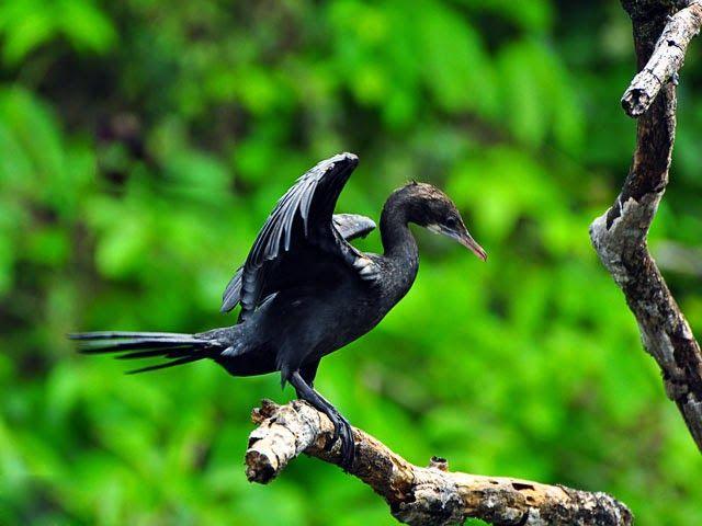 wildlife sanctuary in goa